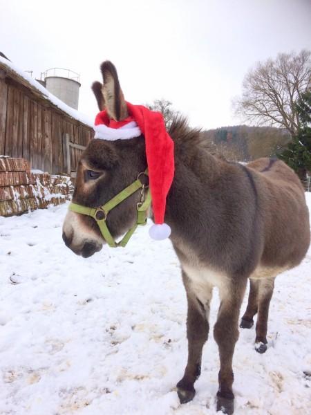 einladung_weihnachtsbasar_teaser